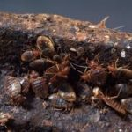 Why Have Bed Bugs Made a Comeback?